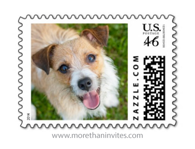 Cute jack russell terrier puppy dog photo postage stamp