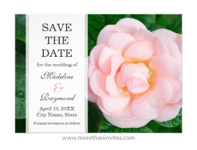 Fresh pink garden rose wedding save the date announcement