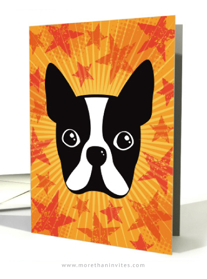 Boston terrier and grunge stars on yellow orange sunburst