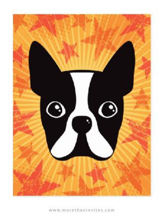 Boston terrier postcards with orange stars and sunburst